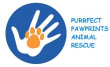 Purrfect pawprings LOGO.JPG